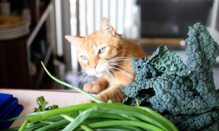 veg-kitty